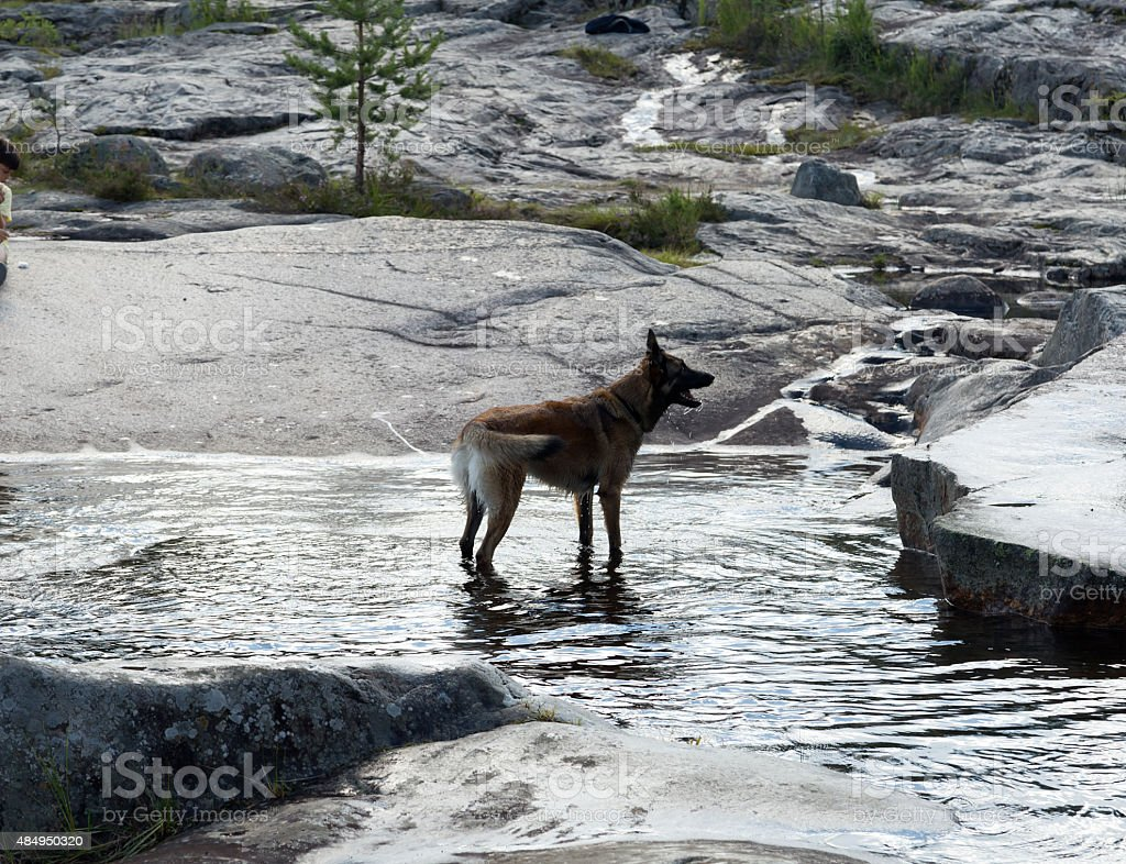 The dog royalty-free stock photo