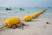 The dog sleep on the beach