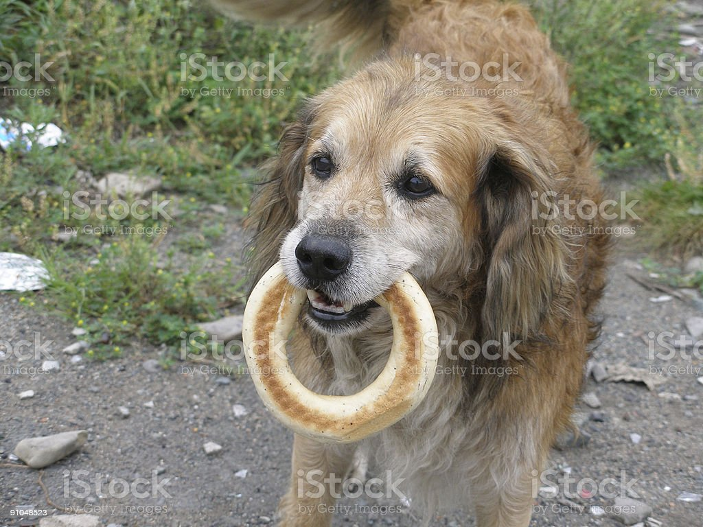 The dog with a bagel stock photo