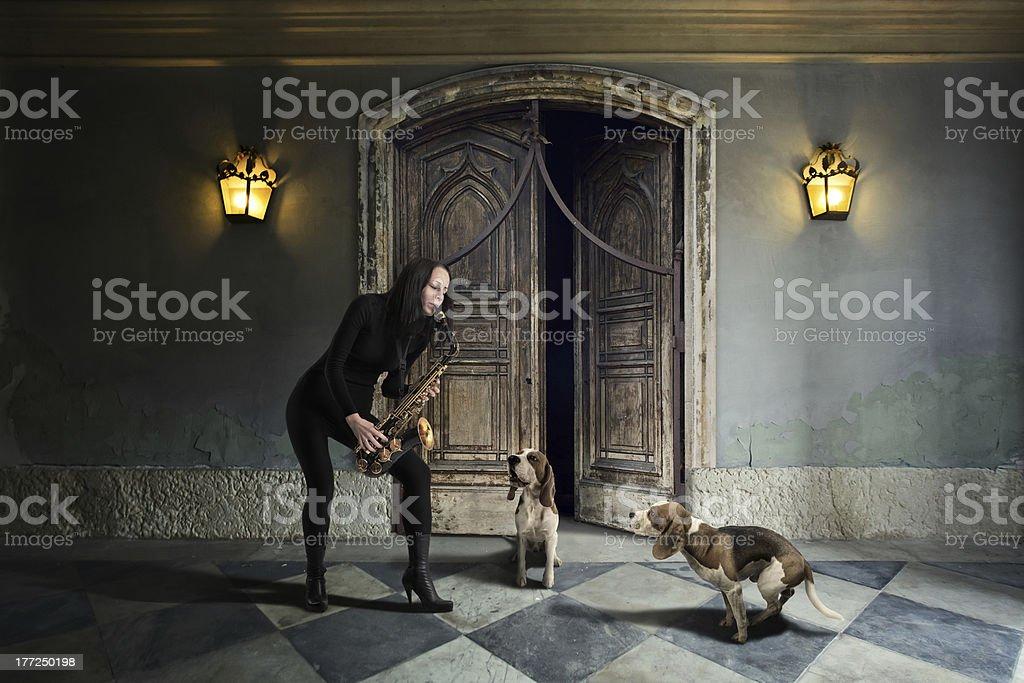 The doggy blues. royalty-free stock photo