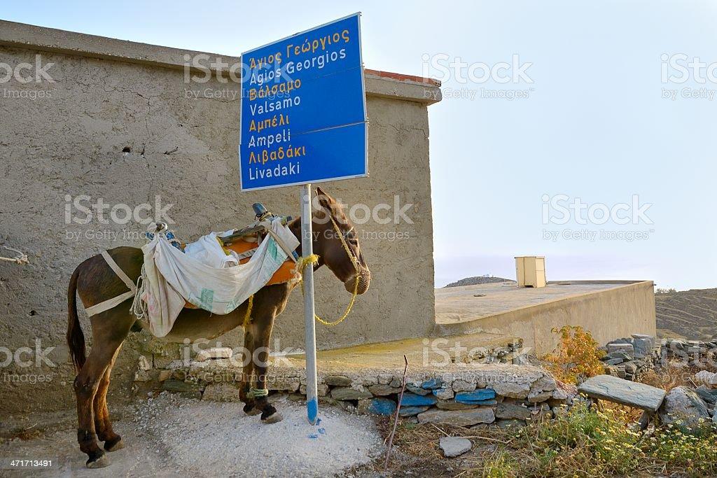 The donkey stock photo