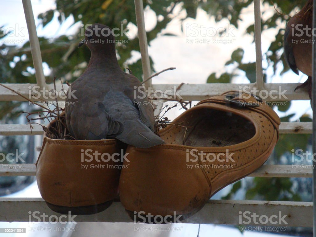 The doves home royalty-free stock photo