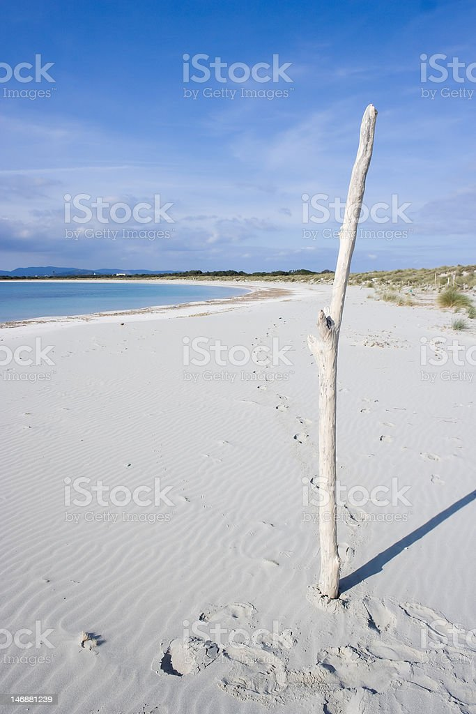 The driftwood. royalty-free stock photo