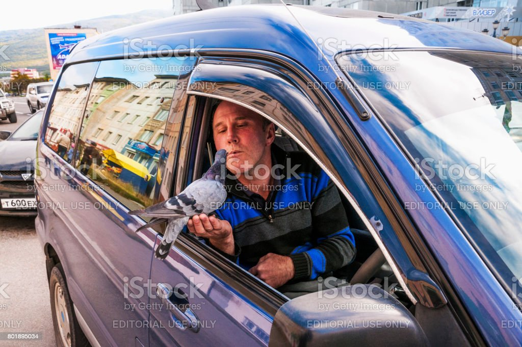 The driver of a car feeds a wild pigeon from his lips with sunflower seeds. All this takes place on the roadside in the city of Magadan (Eastern Siberia), and it looks from the side of everyday life. All this lasts for several minutes, but passers-by do n stock photo