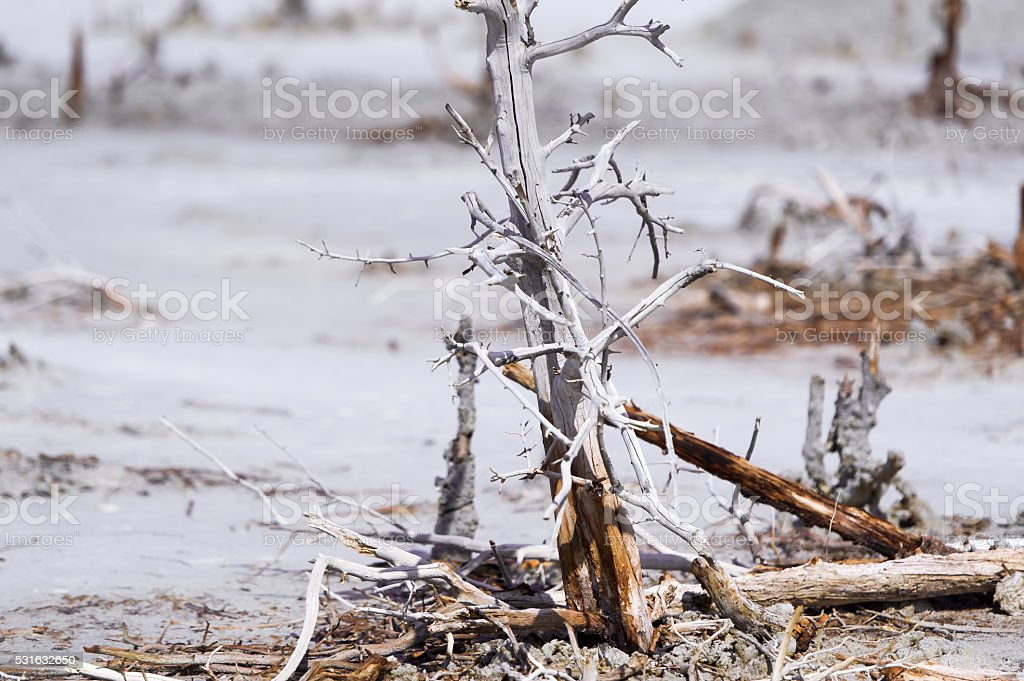 The dry bush grows on contaminated land. stock photo