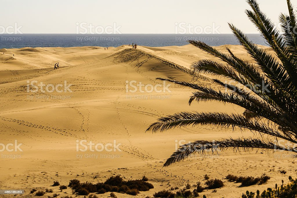Las Dunas de Maspalomas at Gran Canaria stock photo