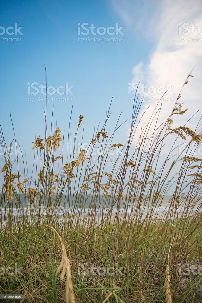 The Dunes stock photo