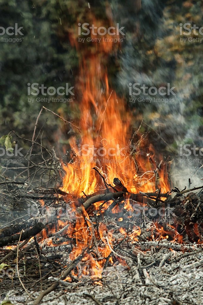 The dying bonfire with upward flame and ashes stock photo