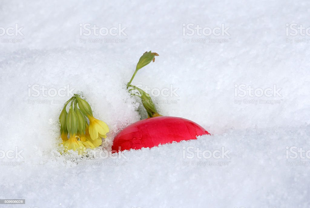 The Easter egg in the snow stock photo