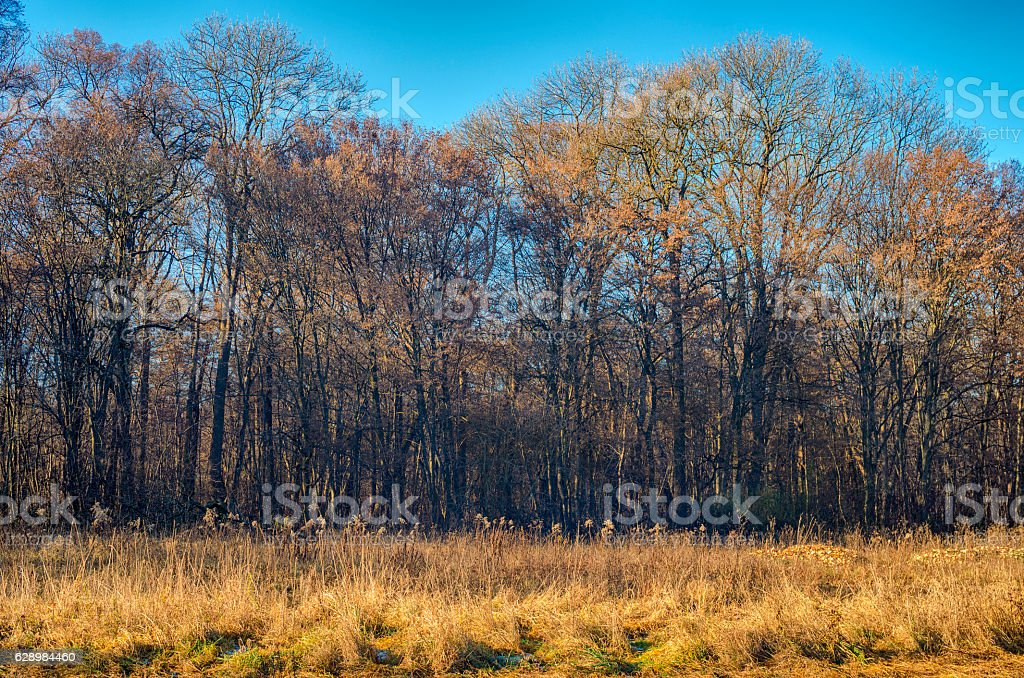 The edge of a forest during fall royalty-free stock photo