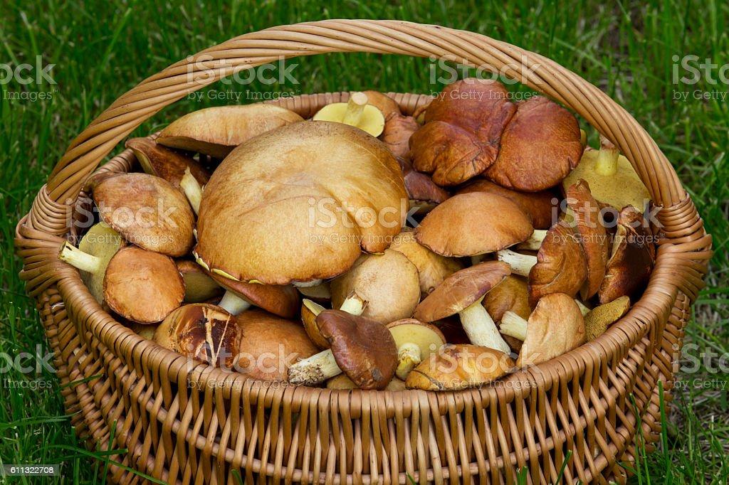 the edible mushrooms stock photo