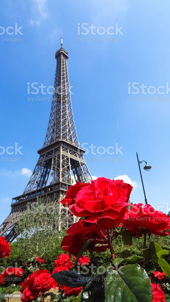 The Eiffel Tower of Paris (France) behind a red rose stock photo