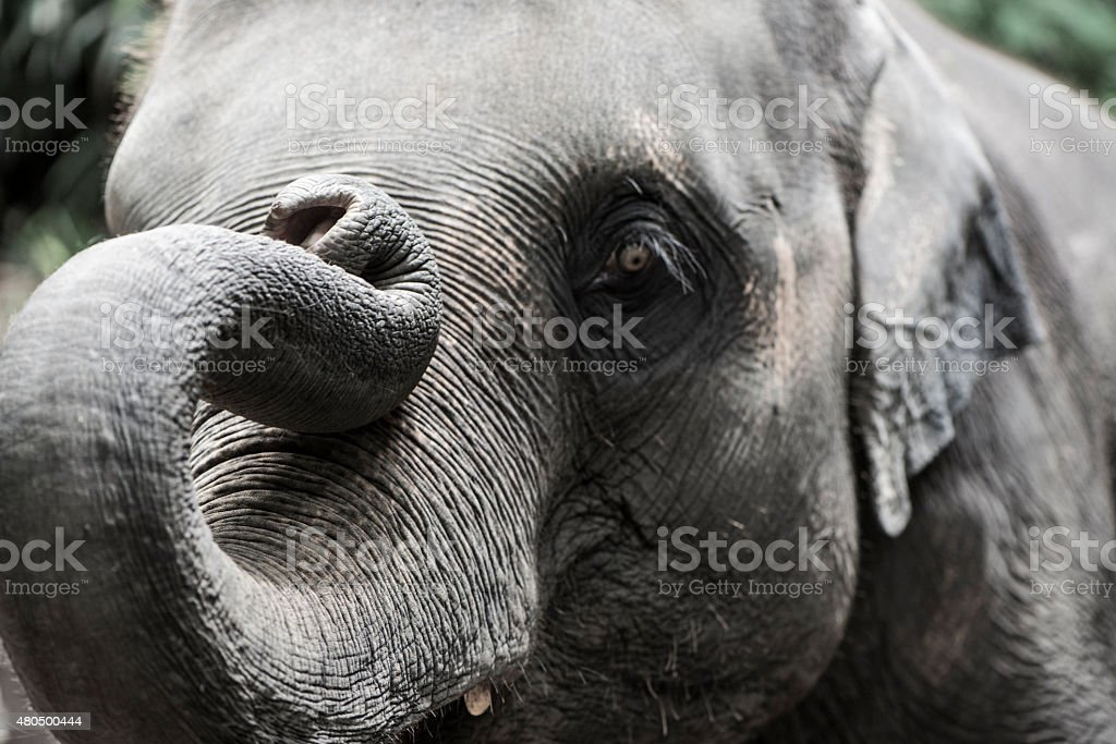 The elephant in nature stock photo