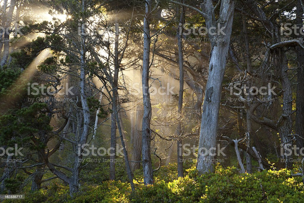 The Enchanted Forest royalty-free stock photo