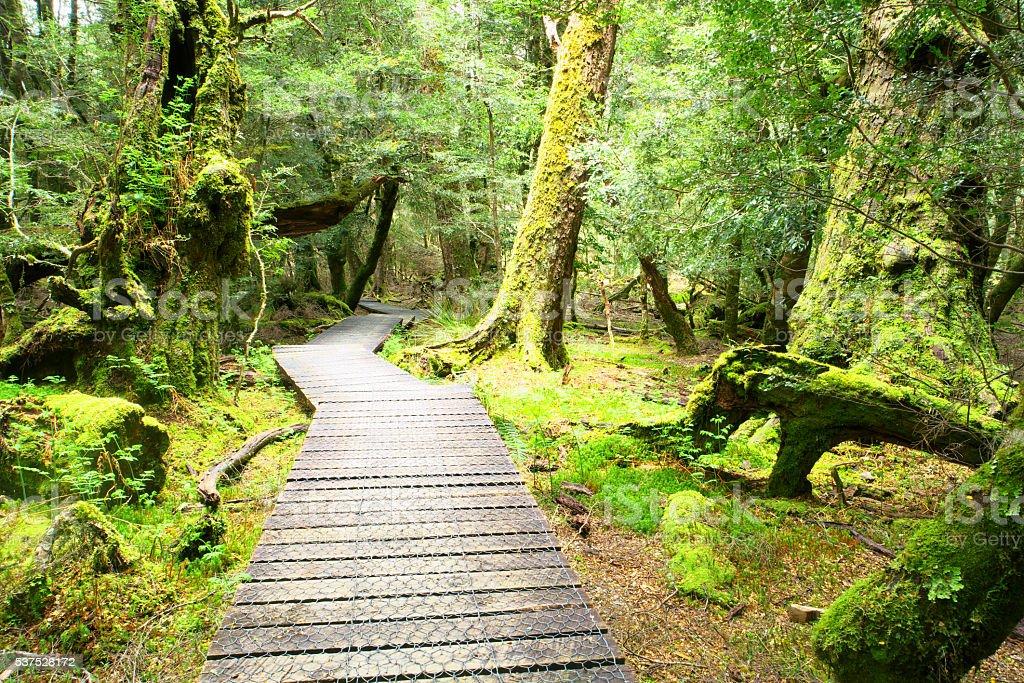 The enchanted walk in world heritage cradle mountian area tasmania stock photo