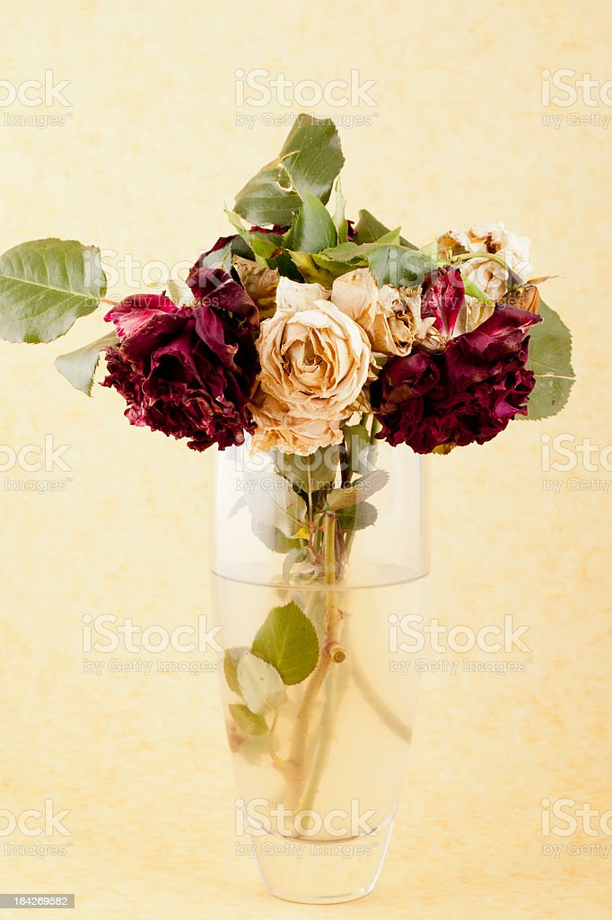 The End: faded red and white roses royalty-free stock photo