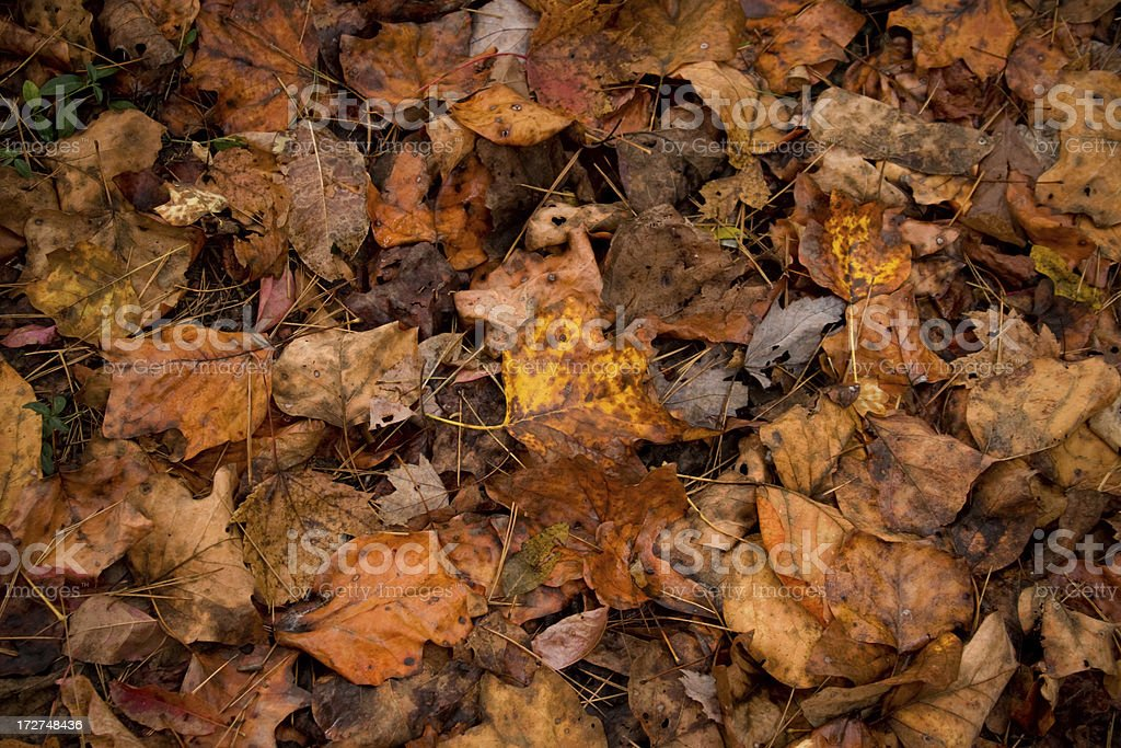 The End of Autumn royalty-free stock photo