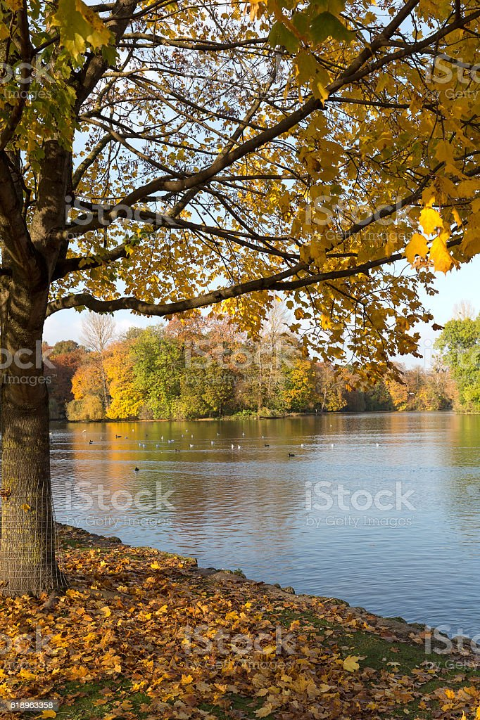 The english garden in Munich, Germany, in autumn stock photo