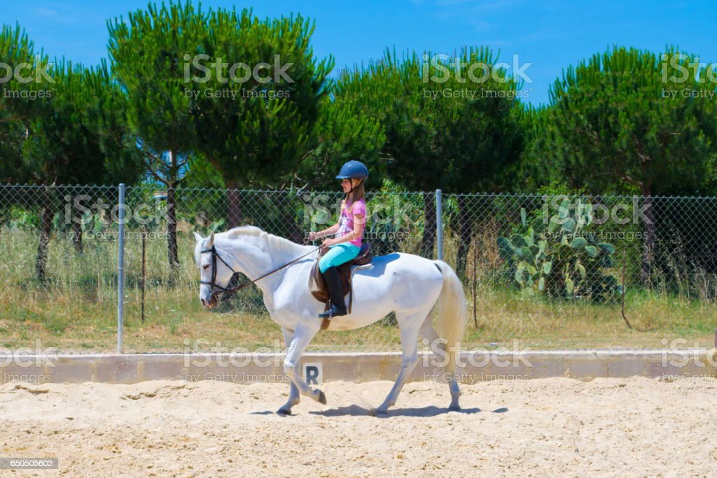 The equestrian on the Andalusian horse. stock photo