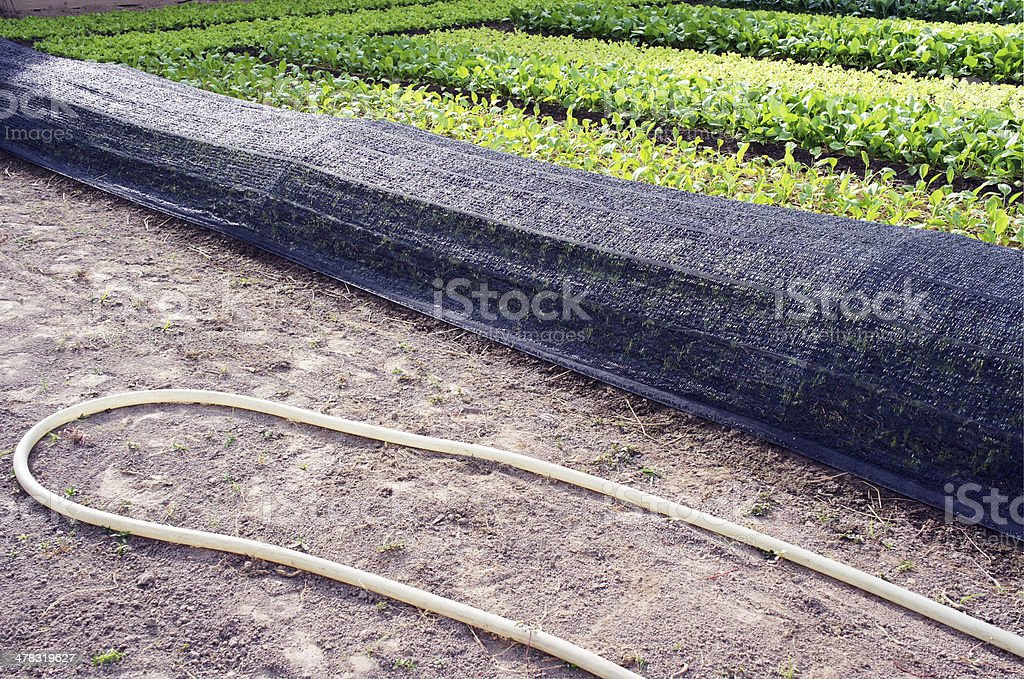 The equipment used for growing vegetables royalty-free stock photo