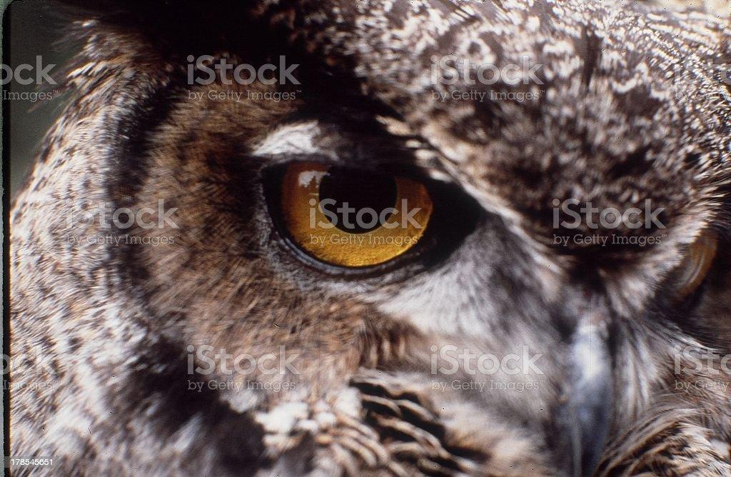 The Eye stock photo