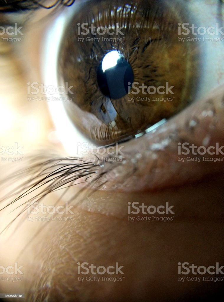 The eye stock photo