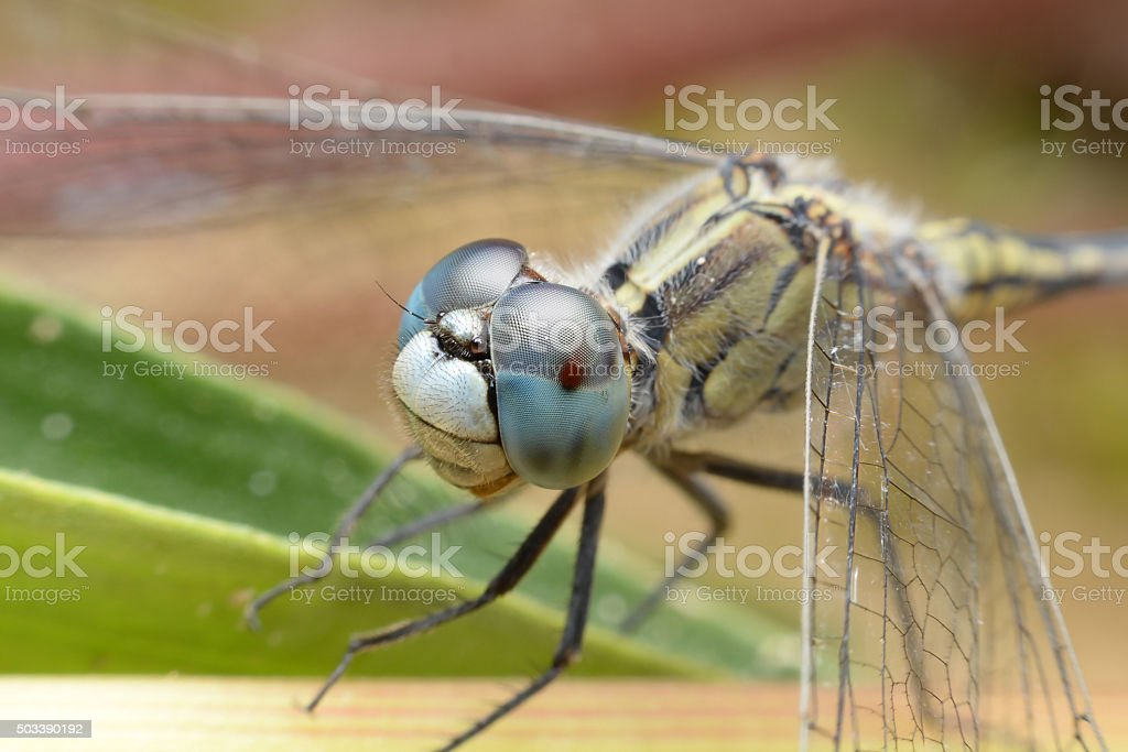 The eyes of a dragonfly in the near term stock photo