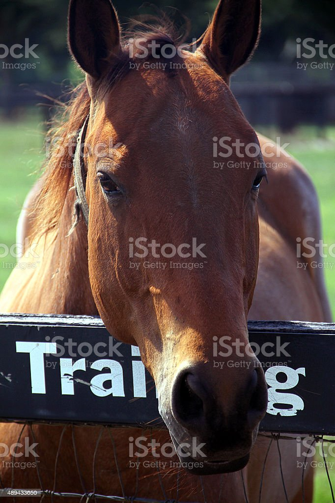 The eyes of the horse & brown horse eyes beautiful stock photo