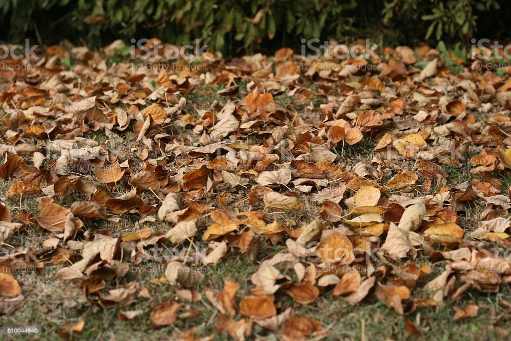 The fallen leaves stock photo