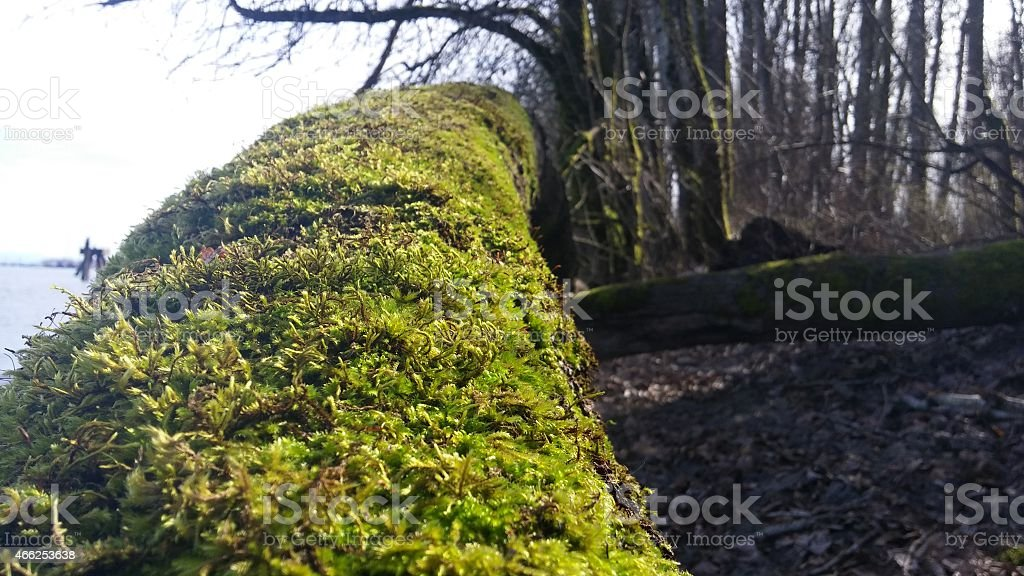 The Fallen Mossy Tree stock photo