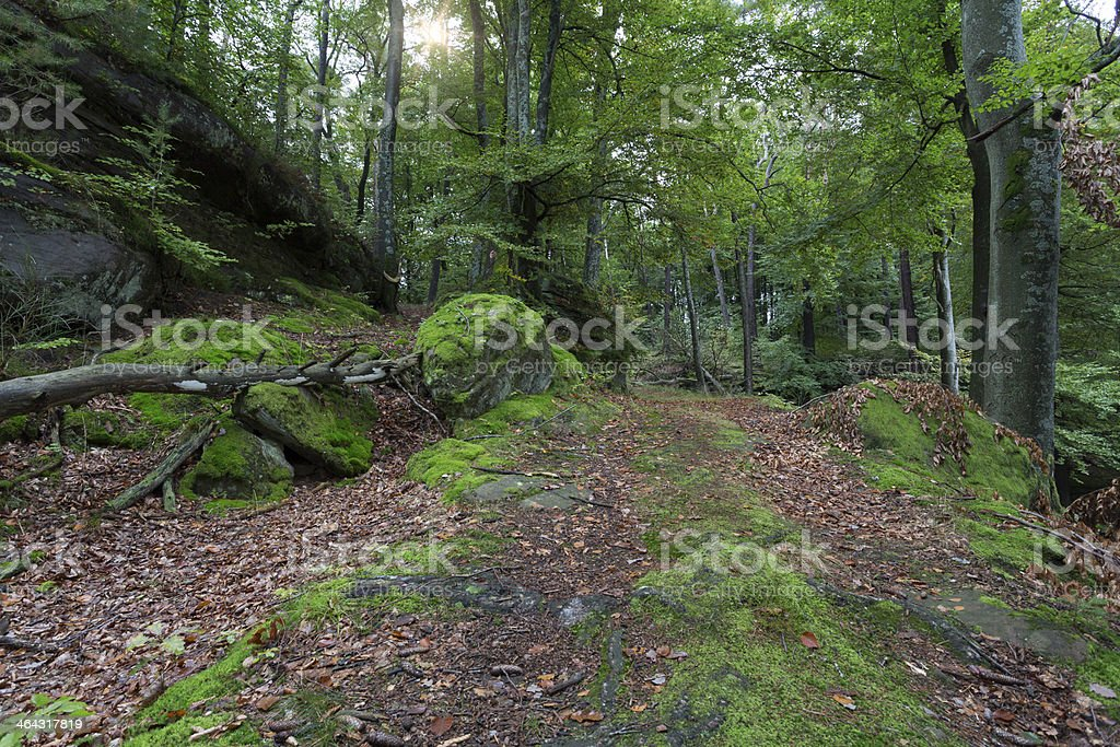 The famous 'Palatinate Forest' in Germany stock photo