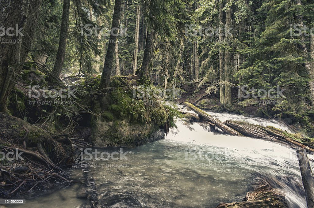 The fantastic river in wood stock photo