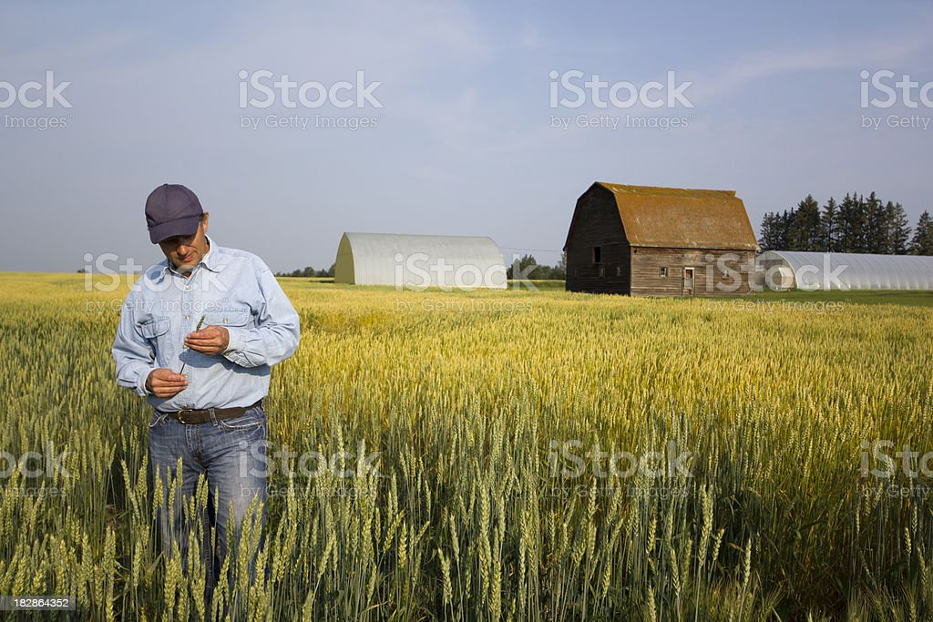 The Farmer stock photo