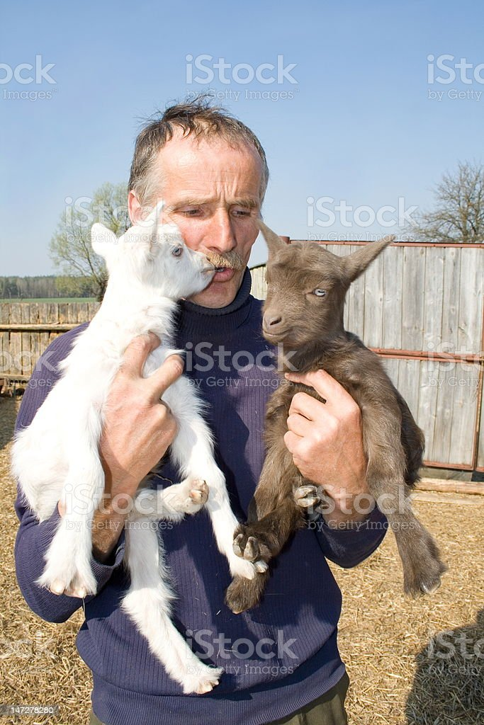 The farmer with goatlings. royalty-free stock photo