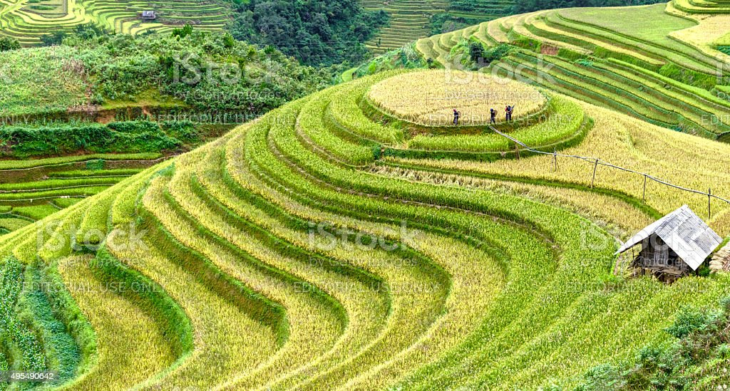 The farmers go to work on on terraced fields stock photo