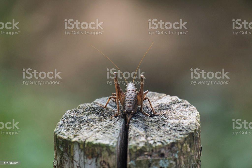 The female green grasshopper autumn back view stock photo