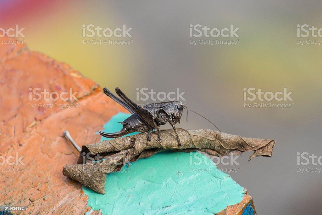 The female green grasshopper autumn dry sheet stock photo