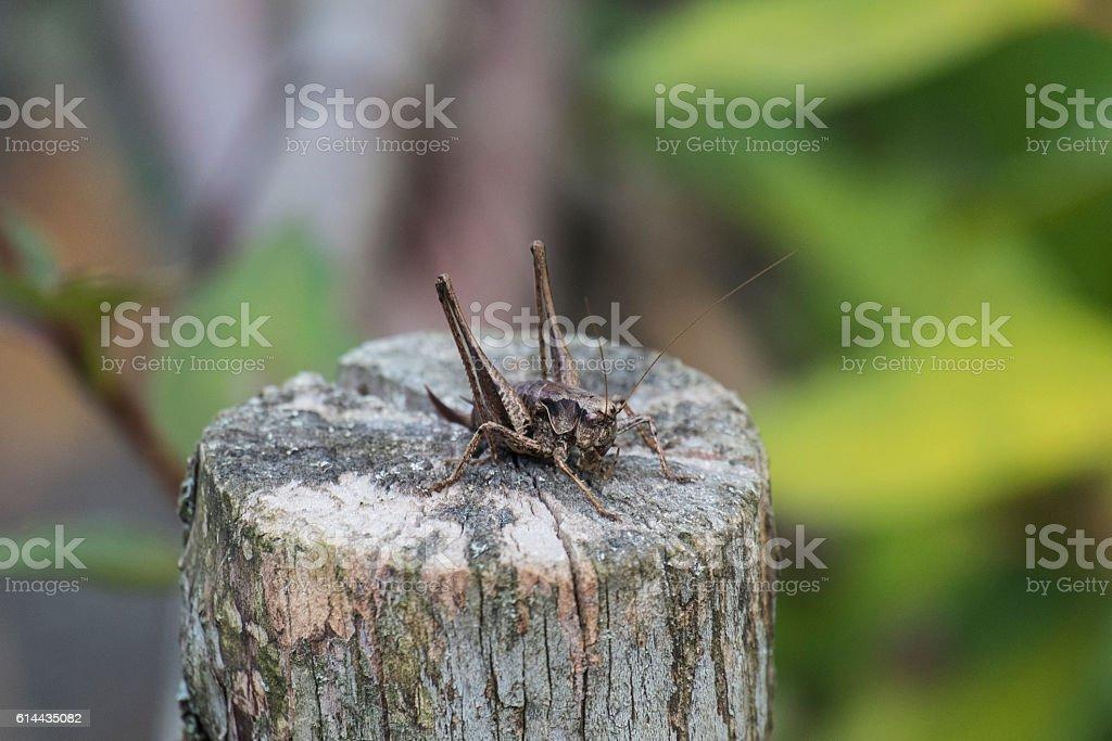 The female green grasshopper autumn half-turn stock photo