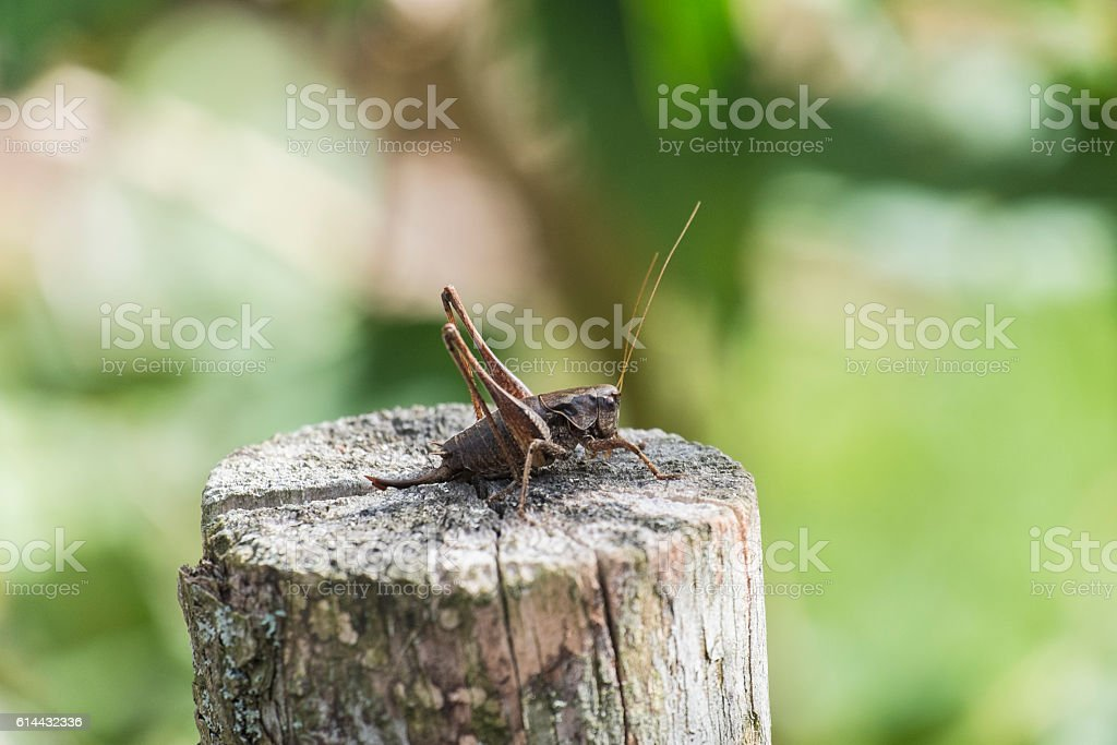 The female green grasshopper autumn side view stock photo