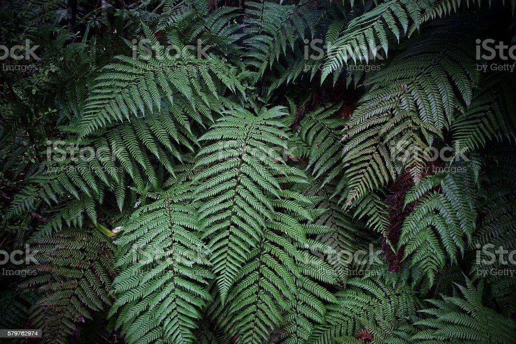 The fern in rain forest near FRANZ JOSHEP stock photo