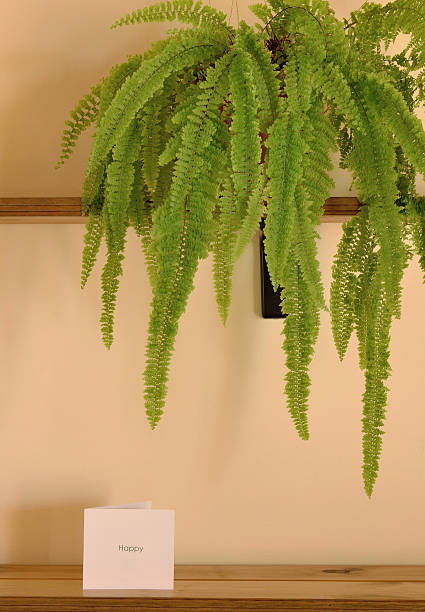 house plant identification by leaf pictures images and stock photos
