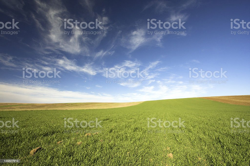 The field and blue sky. royalty-free stock photo