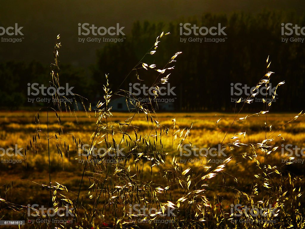 El campo stock photo