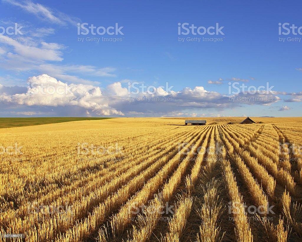 The fields of Montana stock photo