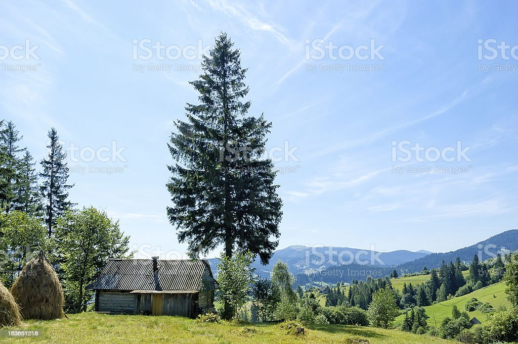 The fir and cabin stock photo