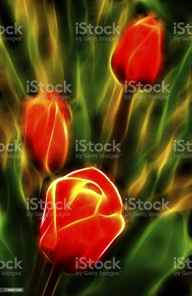 The Fire of Tulips royalty-free stock photo