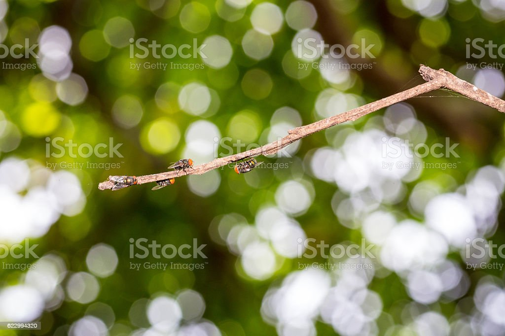 The flies perch on branches stock photo