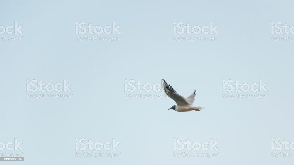 The flight of seagulls stock photo