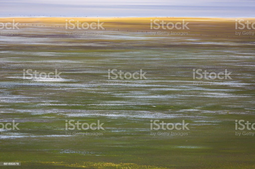 The flooded lake shore of Lake George stock photo