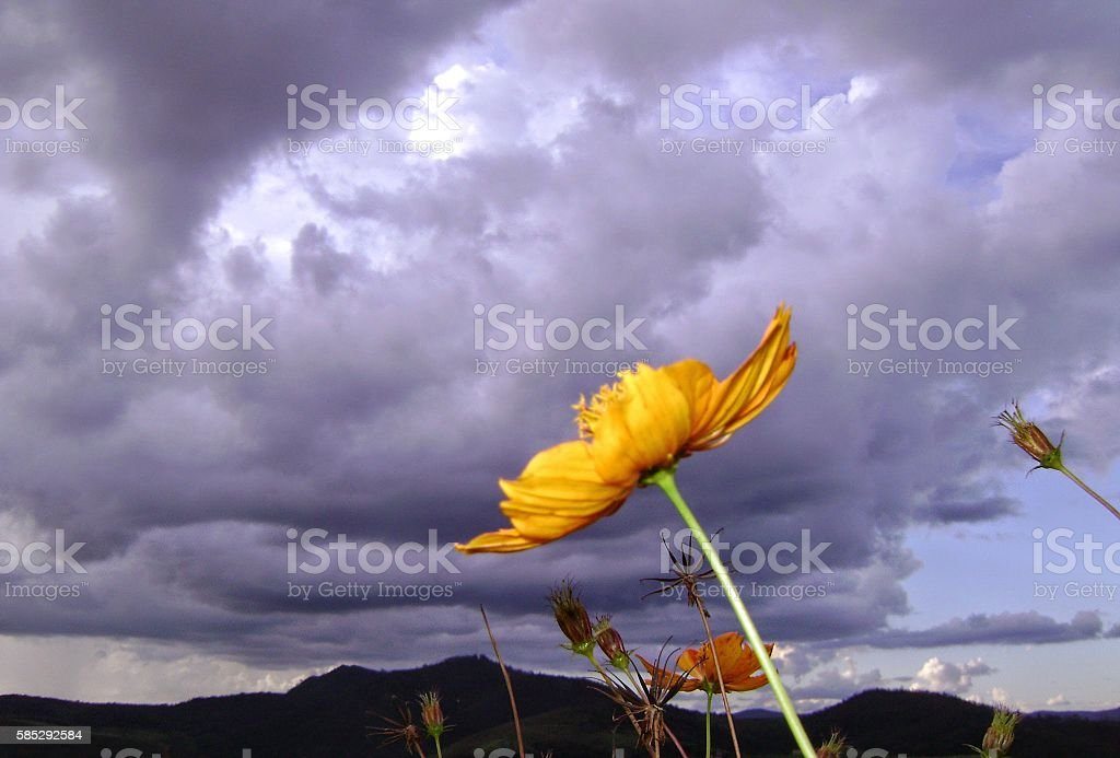 The flower and the storm stock photo
